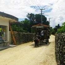 *竹富島を回る牛車