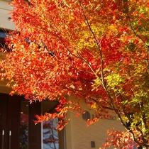 紅葉の中庭