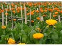 【車5分~】一足早く春を迎える南房総でお花摘み♪