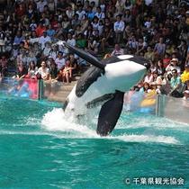 【車約60分~】鴨川シーワールド。シャチのダイナミックショーが人気。