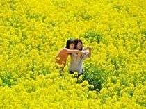 【車約80分~】マザー牧場。黄色い菜の花が広がる花畑で金運UP!