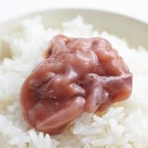 【朝食/塩辛】