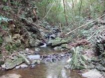 敷地沿渓流