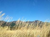 有名なススキ草原までは当館から2700m