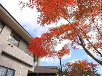 玄関前の紅葉(11月)