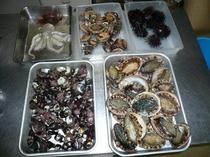 新鮮な貝類