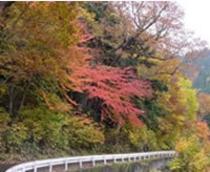 照葉峡の紅葉 (10月)