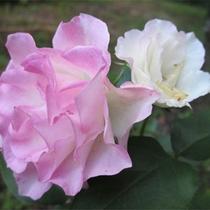 *四季に彩る当館のお花/自然の恵みを目で楽しむ。