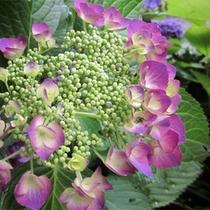 *四季に彩る当館のお花/咲いているのを見つけたら心が和むはず