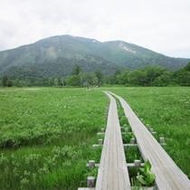 *尾瀬の風景/日本最大規模の高層湿原をゆっくりと楽しむ