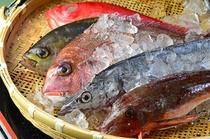 自慢の鮮魚は富山湾と相模湾からの旬を