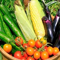 新鮮浦島農園野菜