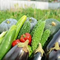 自家農園にて野菜も栽培