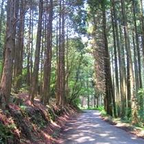 湯布院から車で20分の一軒宿。林を進んで行きます。