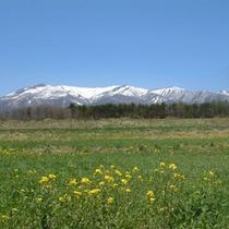 *【不忘山】春の美しい景色♪