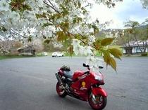 バイク写真2