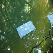 ■池にメッセージが浮かんできますよ♪