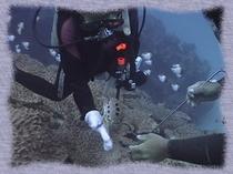 5.  笠利の海のダイビング