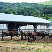 五島和牛(イメージ)