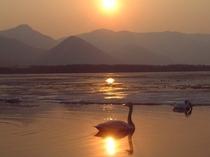 春浅い屈斜路湖と白鳥