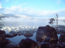 コタン温泉の露天風呂と白鳥