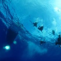 *【ダイビング】魚たちの住む深い海の底へ