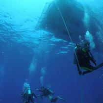 *【ダイビング】海の底を楽しむ神秘的な体験をしませんか?