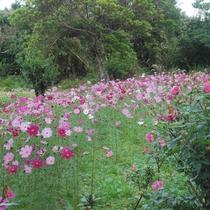 【バラ園一例】県内唯一のバラ園には約1500株の花が咲き乱れます。