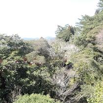 *【景色】お部屋によっては霧島神宮の森をご覧頂けます。