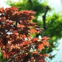 【秋の紅葉】諏訪湖は折々の季節を感じる事が出来ます。