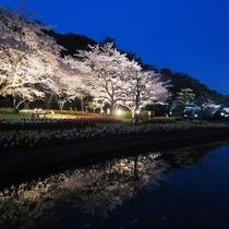 はままつフラワーパーク夜桜