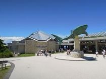 【観光】美ら海水族館