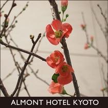 京都観光画像9