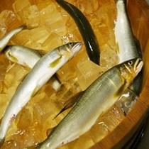 鮎釣り名人が釣り上げた天然鮎