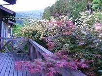 6. モッコウバラ。今年も咲きました。