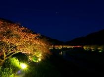 みなみの桜と菜の花まつり(夜桜ライトアップ)