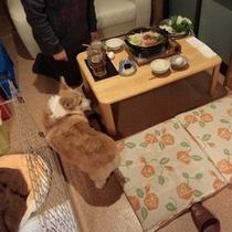 【お部屋で夕食♪】