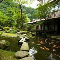 ●庭園 池の鯉