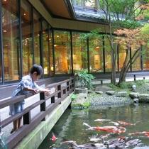 日本庭園では鯉やカモに餌付け体験も!お子様も楽しい滞在に♪(夏期限定)
