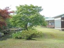 ゲストハウスの庭園2
