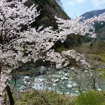 ◆展望露天風呂からの景色※一例(春)