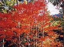 周辺の紅葉