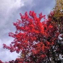 当館から眺められる紅葉