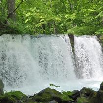 *【奥入瀬渓流】美しい緑に心も癒されます。