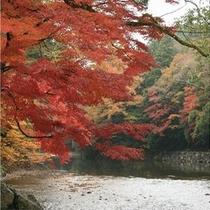 伊勢神宮周辺・五十鈴川沿いの美しい紅葉は11月末が見頃