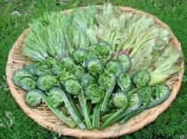 春の収穫 山菜色々