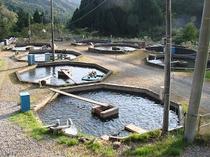 あまごの養魚場