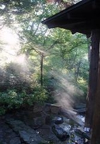 朝日が眩しい新緑露天。