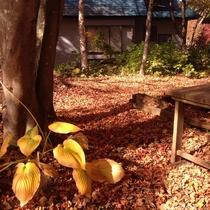 *[秋]裏庭の紅葉/例年10月頃が見頃