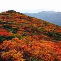 *[秋]一番早く訪れる三ツ石山の紅葉/例年9月中旬~下旬頃が見頃(当館より車で約70分)